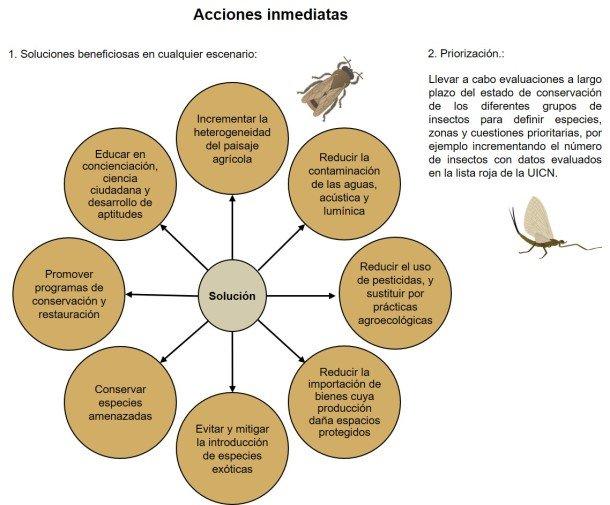 Una hoja de ruta global para conservar los insectos