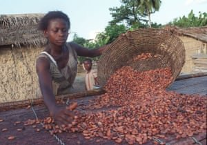 Fairtrade cocoa farmers in Ghana, Africa. Photograph: Karen Robinson/The Observer