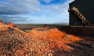Discarded vegetables in Burscough, Lancashire. Photograph: EnVogue_Photo/Alamy