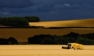 A combine harvester in a field of barley near Salisbury, Wiltshire. Photograph: Scott Barbour/Getty