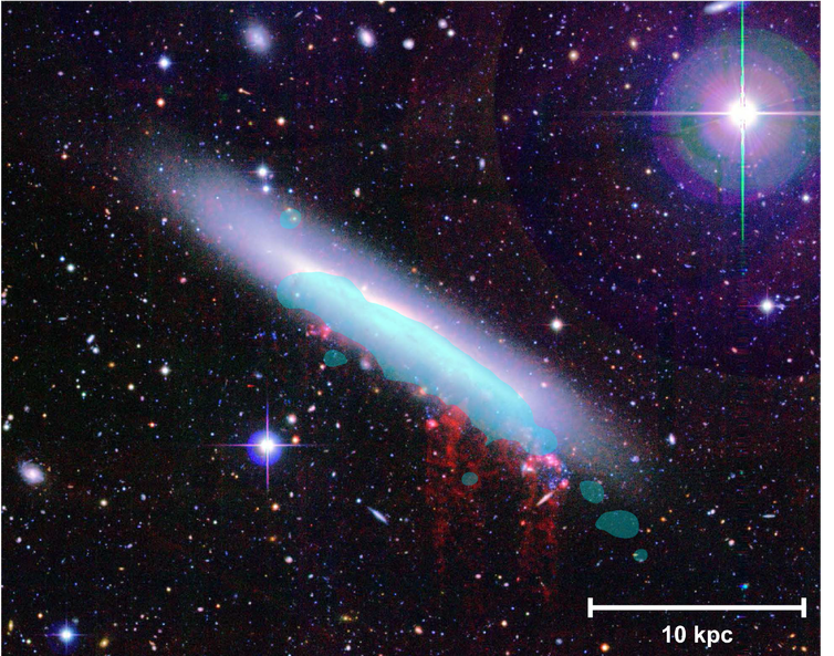 An image of spiral galaxy NGC 4330 in the Virgo Cluster. Ram pressure stripped hot gas is shown in red and a blue overlay shows star-forming gas.