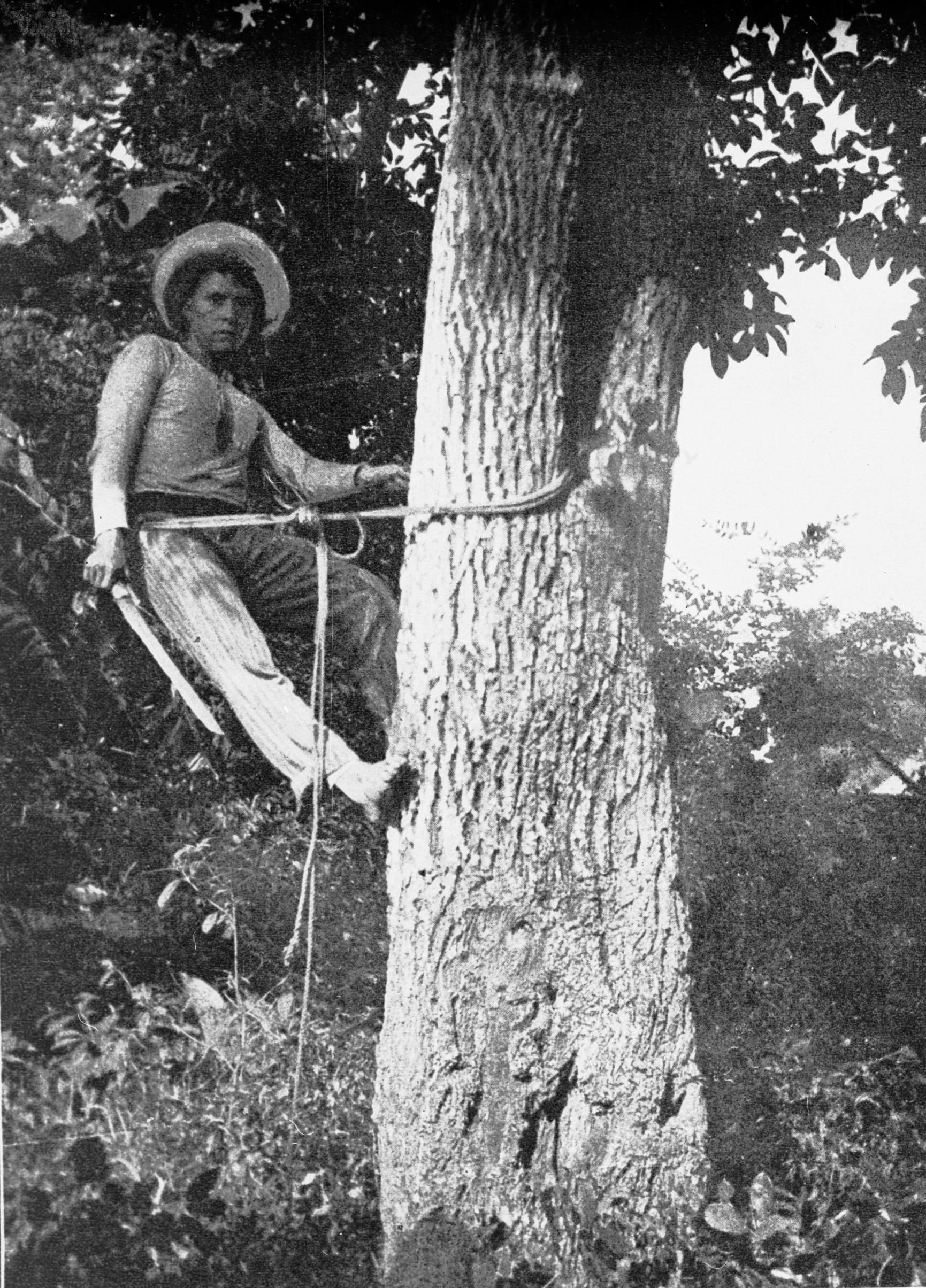 """A """"Chiclero"""" at work in Mexico, circa 1915. From Wikimedia Commons / Public Domain."""