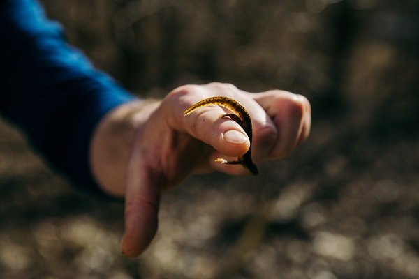 Mr. Conley holds a juvenile salamander from a vernal pool.