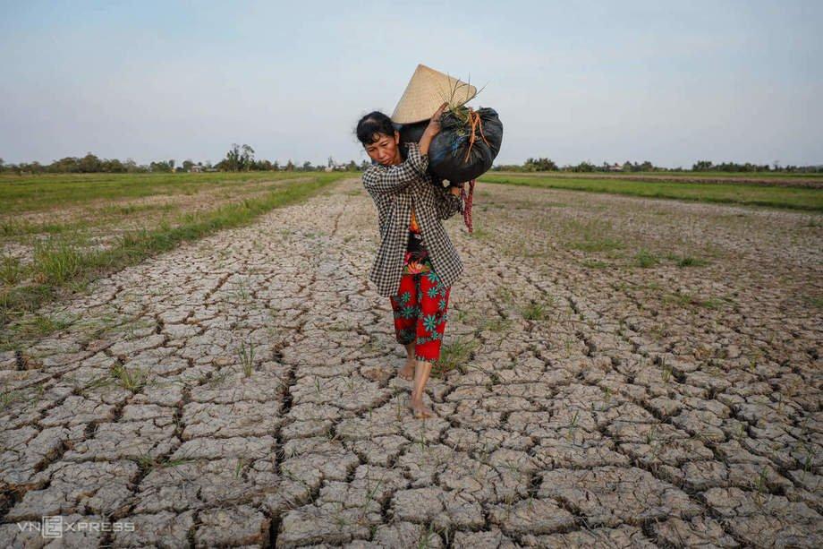 Trên cánh đồng nứt nẻ vì bị hạn mặn tấn công hồi tháng 3, bà Nguyễn Thị Kim Trang