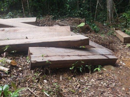 """Gia Lai: """"Máu"""" rừng vẫn chảy, kiểm lâm ở đâu?"""