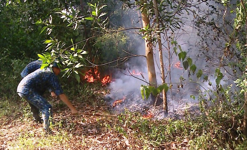 Lửa bùng phát tại 5ha rừng trồng ngay sát sân bay Đà Nẵng