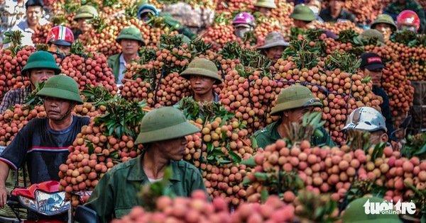Bắc Giang tổ chức hội nghị trực tuyến với Trung Quốc để tiêu thụ vải thiều