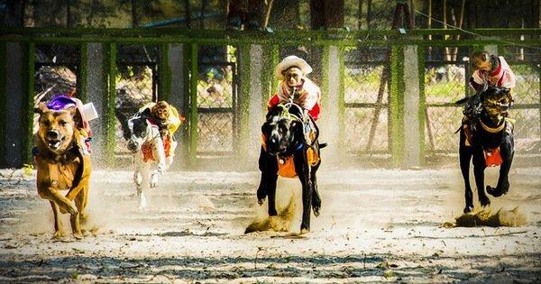 Xem xét cấp phép kinh doanh đặt cược đua chó tại Bà Rịa - Vũng Tàu