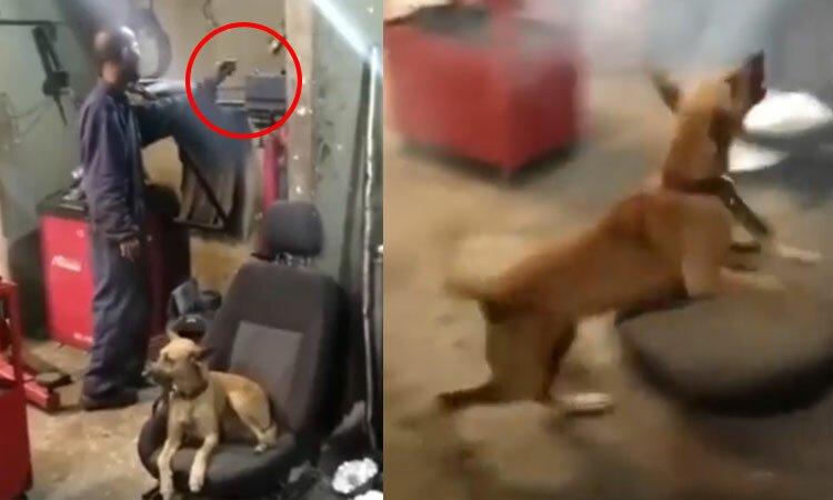 Cún cưng tá hỏa vì bị chủ chơi khăm