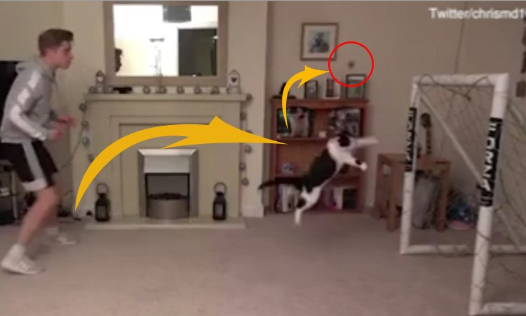 Mèo bay người bắt bóng như thủ môn