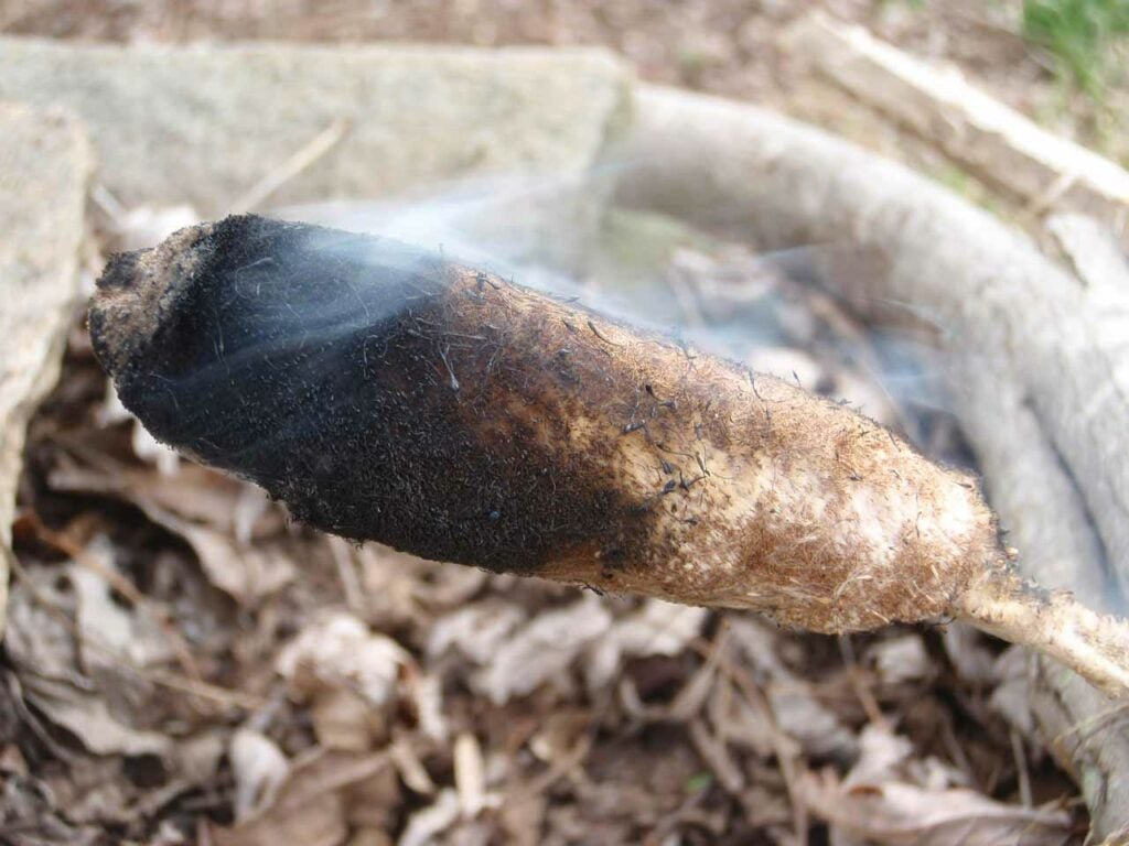 a cattail head burning and smoking