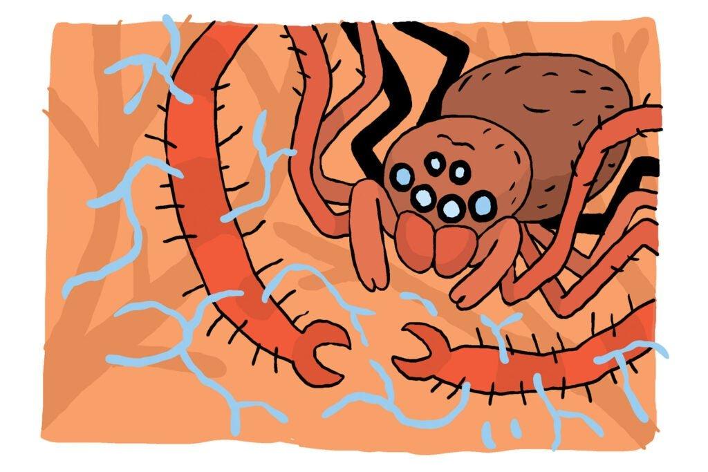 cartoon of spider