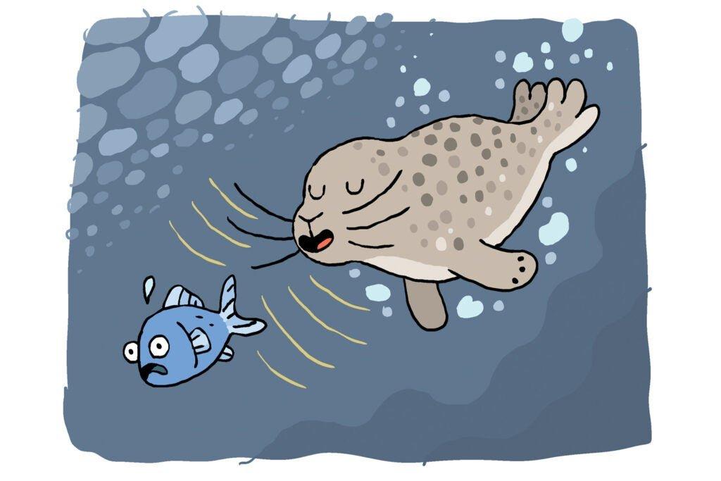 seal chasing fish, cartoon