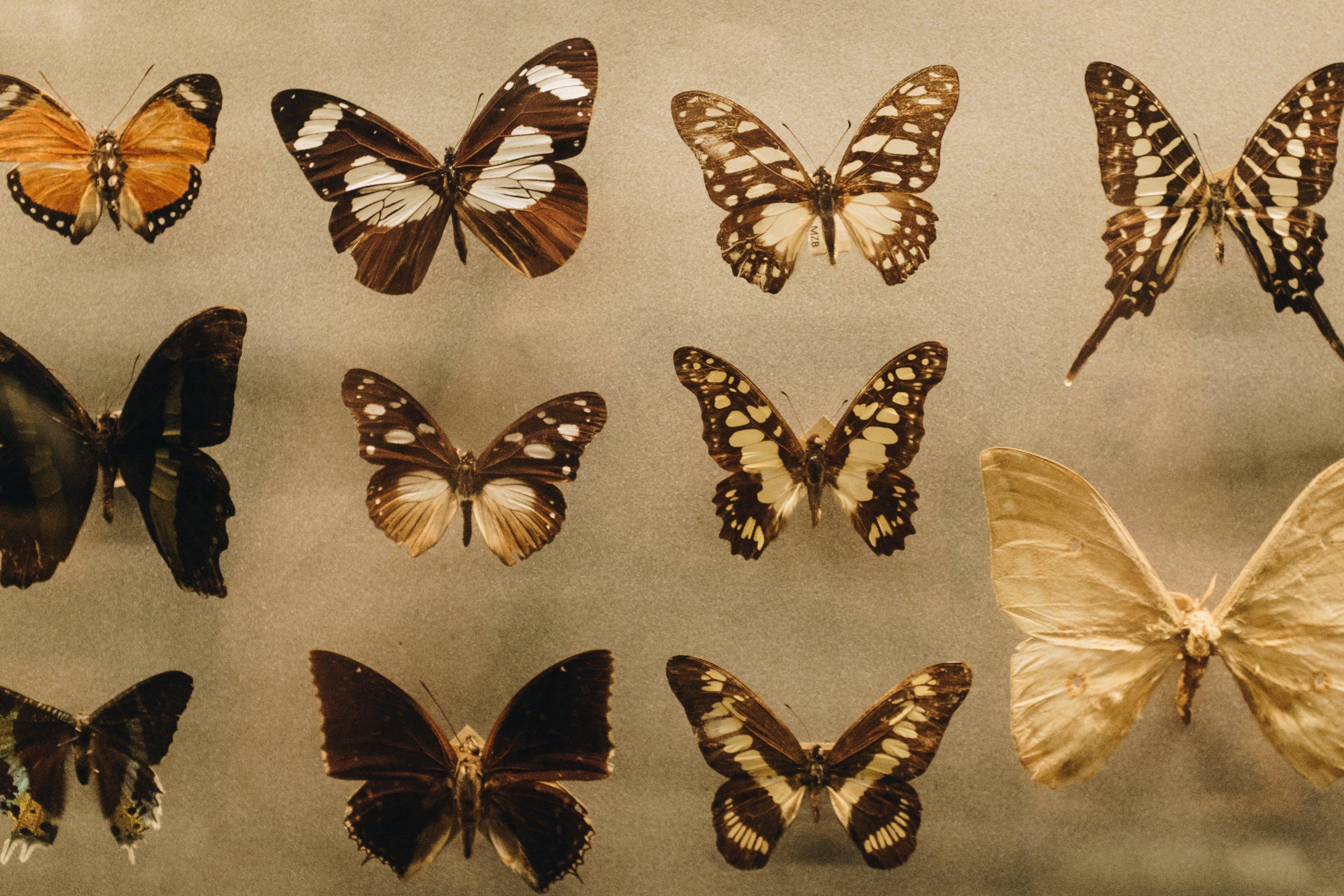 biology-butterflies-collection-1028904.jpg