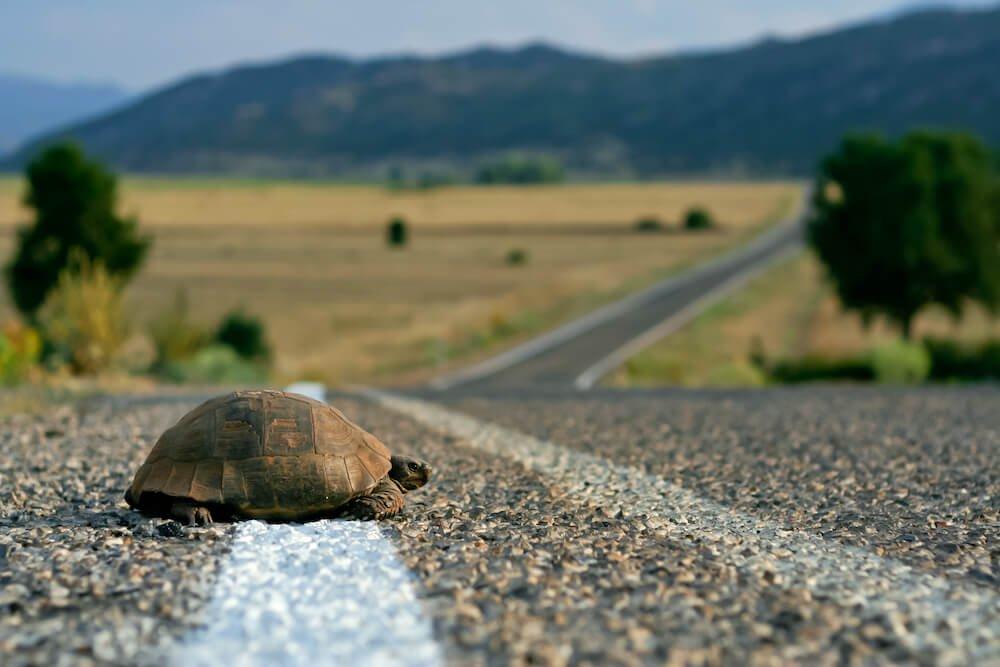 self-awareness-turtle-on-the-road.jpg