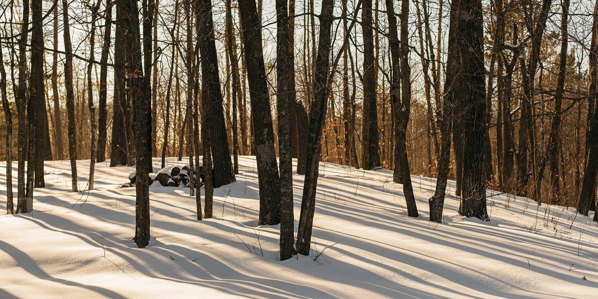 northern-minnesota-2000x900.jpg