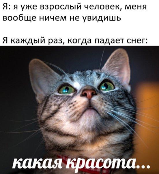 16055711.jpg